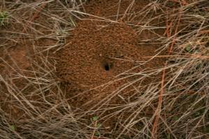 Dec Ground Bee Nest