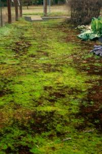 Dec Mossy Path