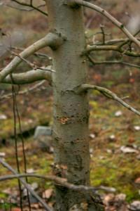Dec Tree holes