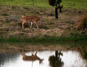 Deer4-Feb2014