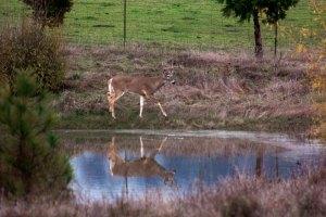 Deer5-Feb2014